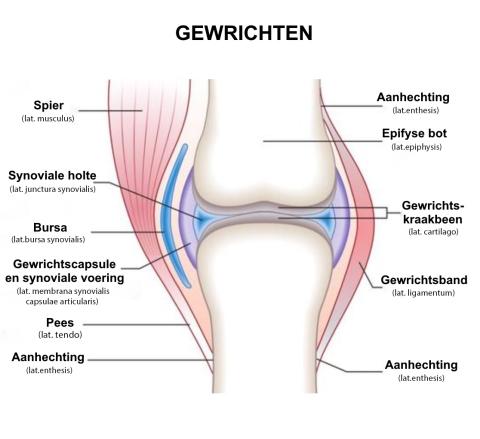 artralgie schouder provoacă artroza articulației cotului